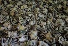 Pripyat Middle School, gas masks on a classroom floor